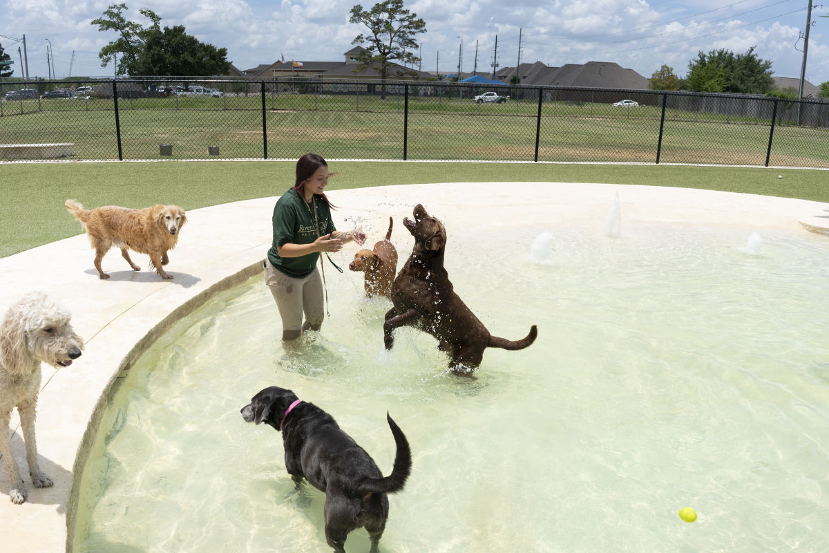 female with 5 dogs splashing